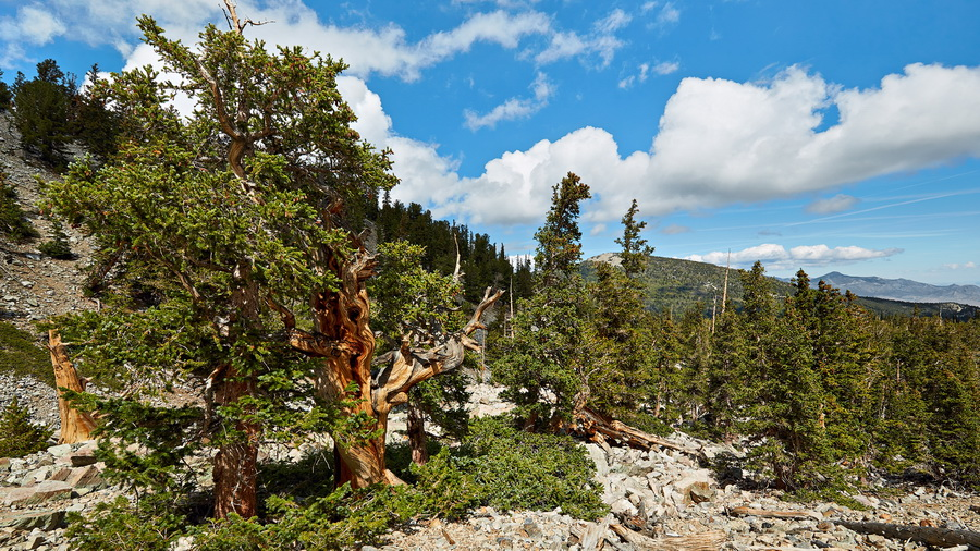324_NE_Great_Basin_National_Park_resize