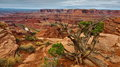 Death-Horse-Point_IMG_8750_resize